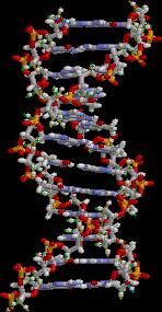Ein Teil eines DNA-Moleküls